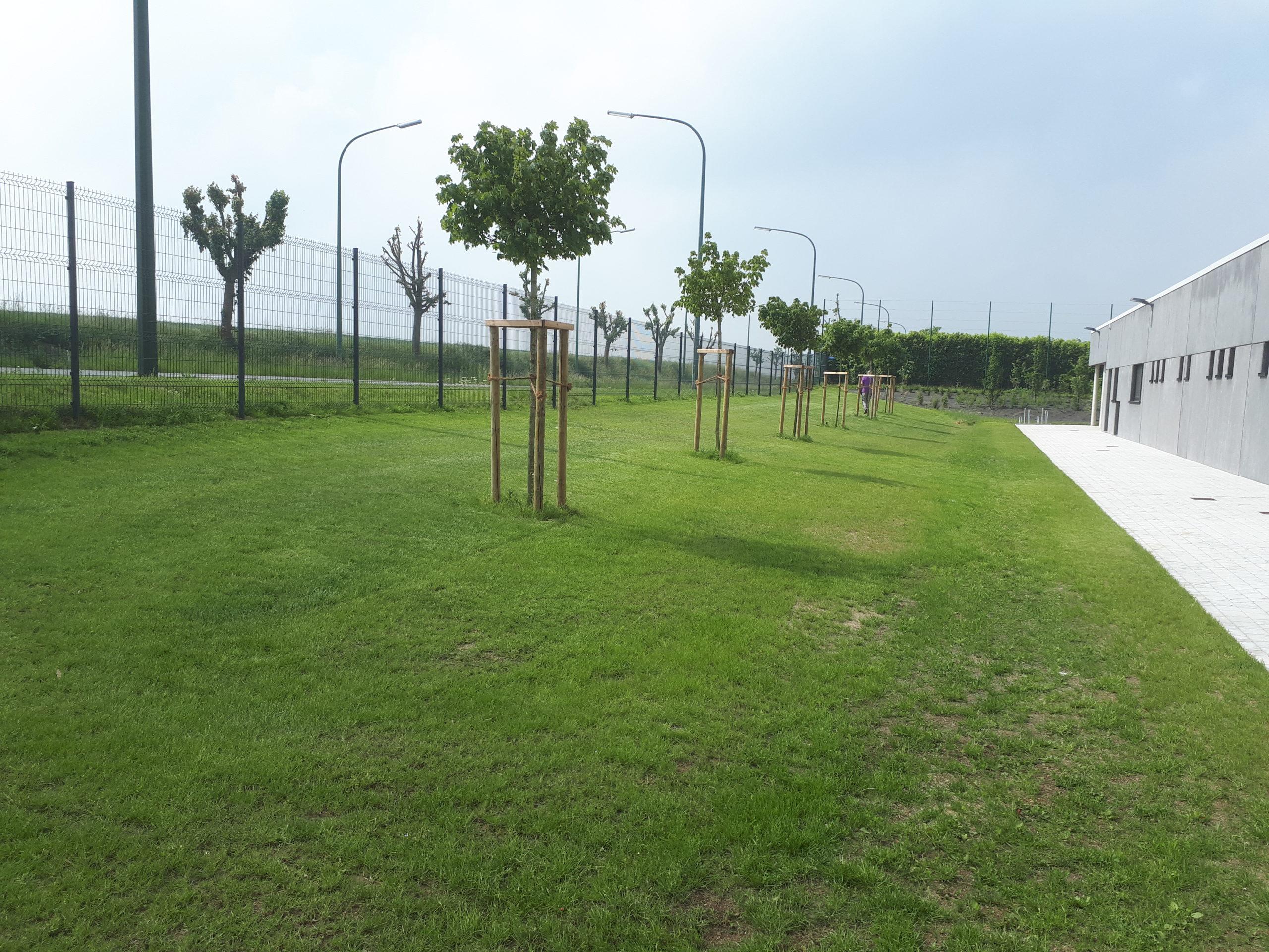 Vert Design Engazonnement